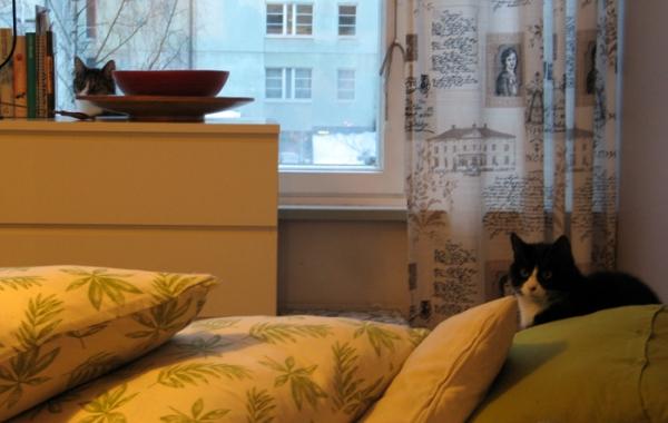Kissat tuijottaa pyörein silmin eteiseen