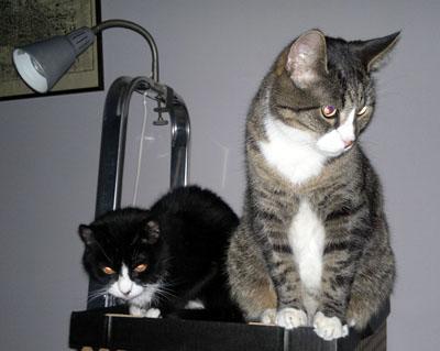 kissat istuu vierekkäin katsoen ihan muualle kuin kameraan