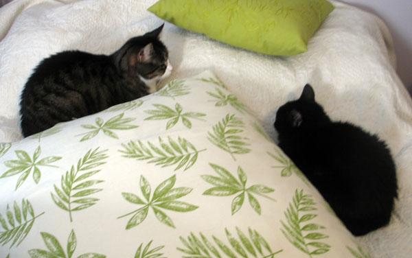 kaksi kisua sängyllä