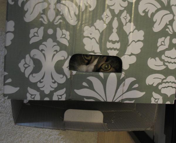harmaan silmät kurkkii laatikosta