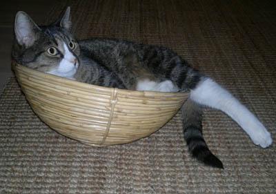 kissa koppakeinussaan