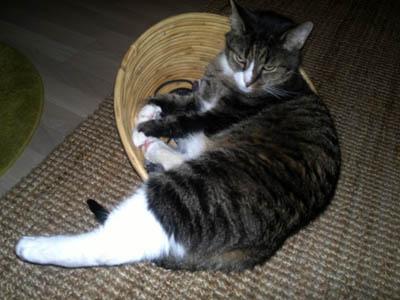 kissan katse kysyy onks pakko kuvata häh