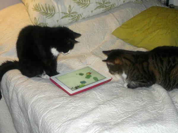 kissat pelaa ipadin hiiripeliä