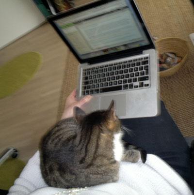 kissa ei voi pelata läppärillä