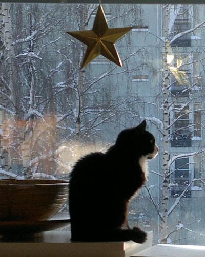 musta kissa ja tähtikoriste
