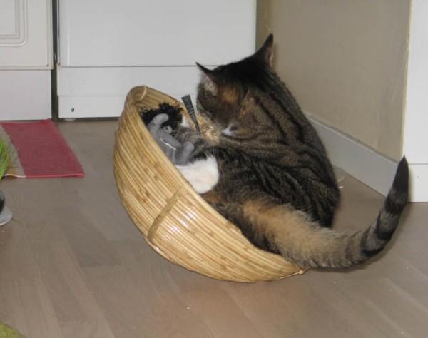 kori keinahtaa kissan alta