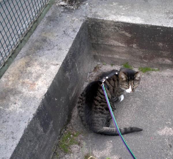 kissa pihalla ei tykkää