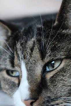 kissan nenä