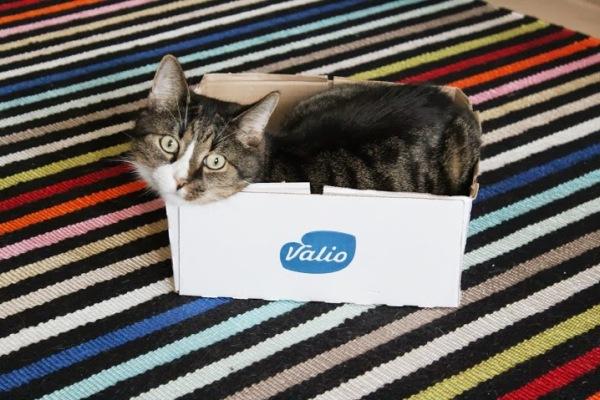 kissa laatikossa