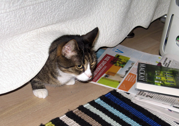 mersu sängyn alla kurkistaa