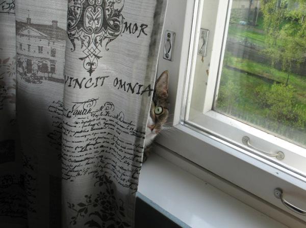 Ikkunalaudalla on aina turvallista, puuh!