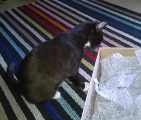 En ollu mä! Mähän olin syömässä tätä pahvilaatikkoo!  Tai niiq.