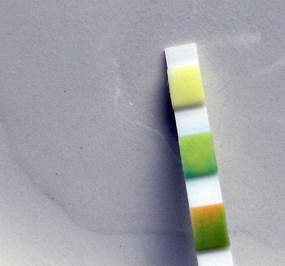 Ylin testityyny säilyi keltaisena - ei sokeria kissinpississä!