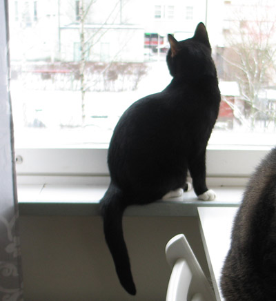 kissa katsoo ikkunasta