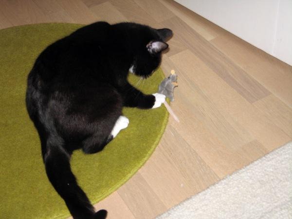 Tsäp tsäp, hiiru! Tsäp!