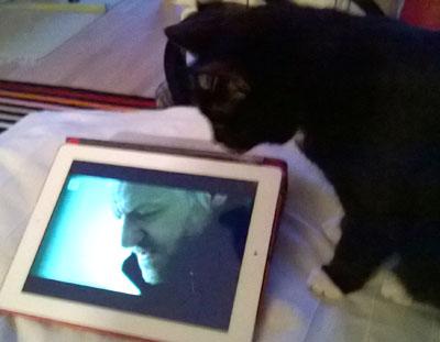 kissa kiinnostuu Arne Dahlista ipadissa