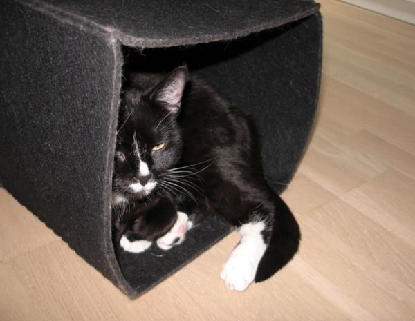 kissa eri asennoissa huopapesässä, musta kuutio