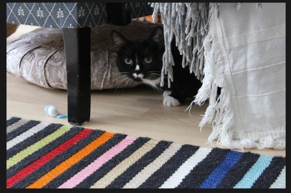 ujo kissa sängynreunan alla
