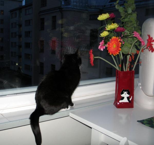 iltsu kyttää ikkunasta yläviistoon tiukkana