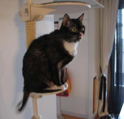 kissa istuu kiipeilytelineessä