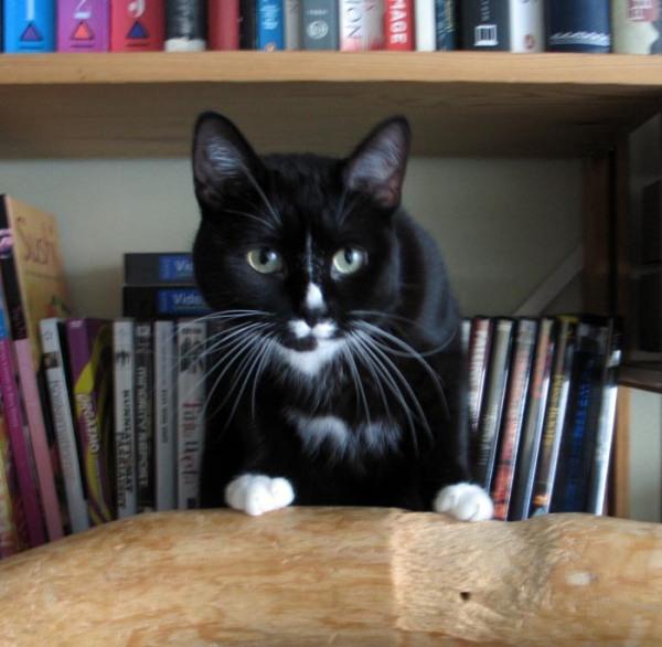 kissa kirjahyllyssä, söpö naama
