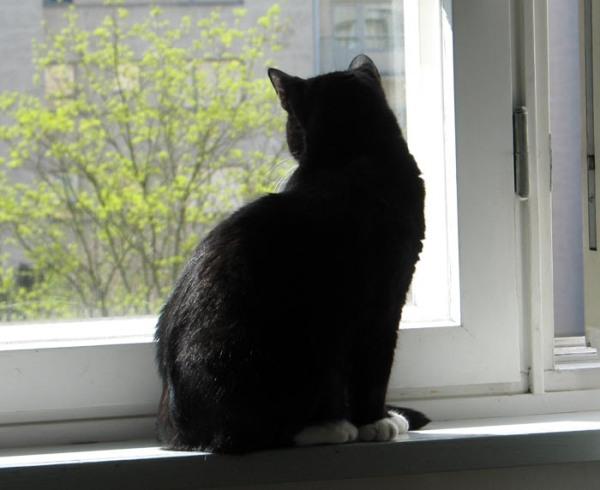 istuu ikkunalaudalla