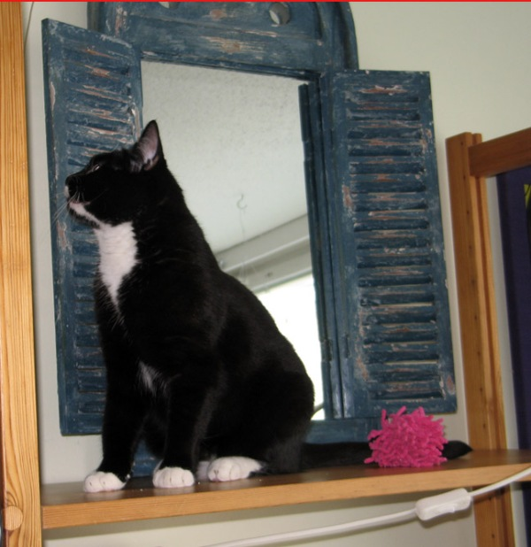 Iltsu aprokoi kannattaako hyllylle jäädä peilin kaa