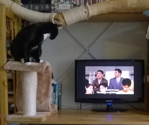 Iltsu kattoo telkkarii korokkeen päältä