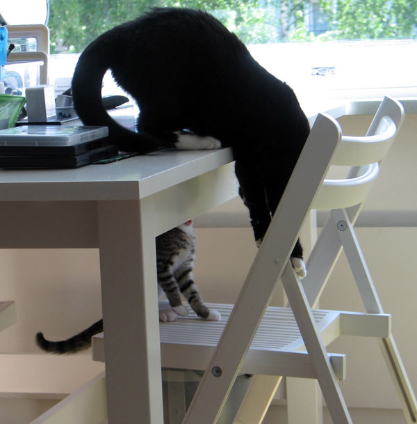 Ilona kurkottaa pöydältä alaspäin nähdäkseen Zetorin joka kyttää häntä pöydän alta
