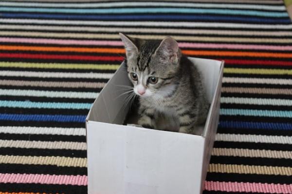 söpöli pikkulaatikossa