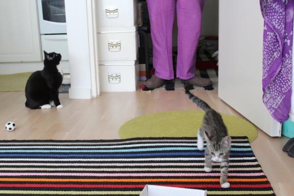 mn jalat ja kissat kokonaisina
