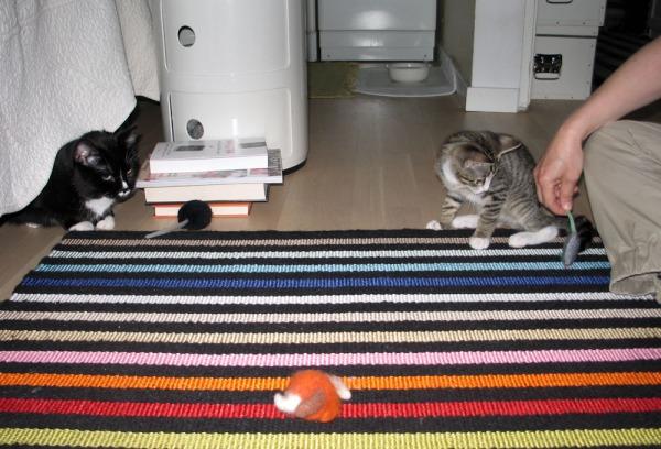 kumpikin kissa näkyvissä jee!