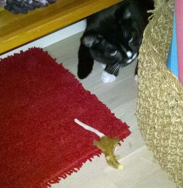 Ilona päästi hiirun hetkeksi suusta