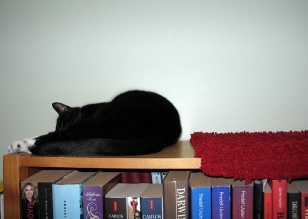 Ilona nukkuu alustan vieressä kirjahyllyn päällä