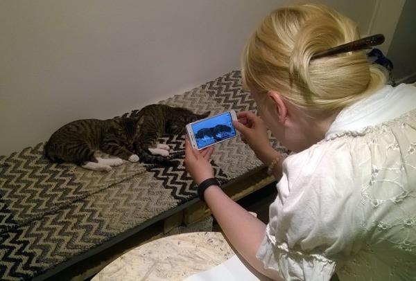 inka kuvaa nukkuvia kissoja