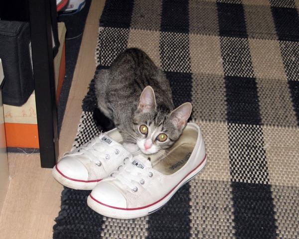 Zetor ja vieraan kengut eteisessä