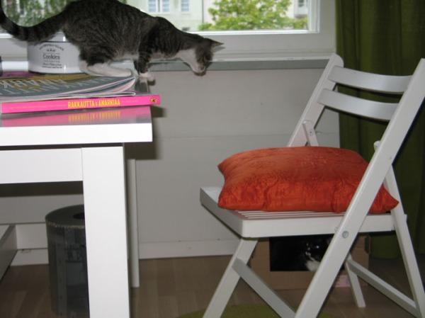 Ilona lattialla, Zetor pöydällä hyppäämässä alas