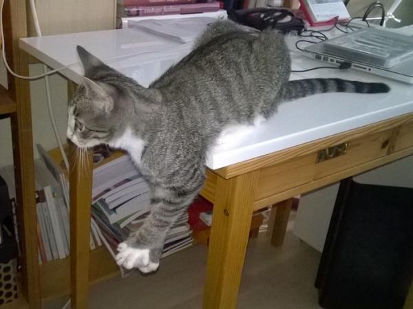 Z takapers pöydällä, etuosa roikkuu ulkopuolella, harottaa varpaita