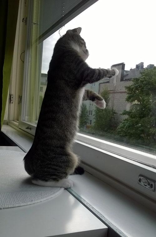 Z pyydystää kovasti ikkunassa