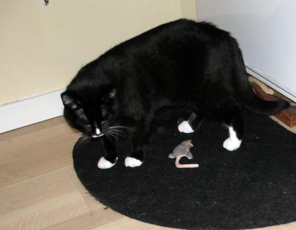 ilona nirhii harmaanta hiirua lattialla