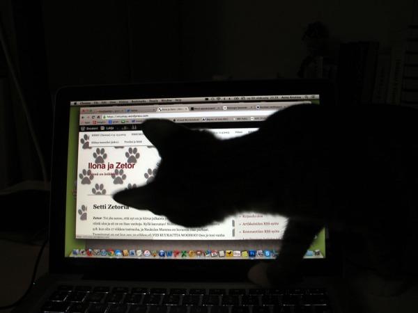 Z katsoo blogia ruudulta, itse näkyy varjokuvana valoa vasten