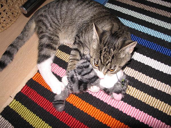 Z tuhoaa kissaa eri asennoissa