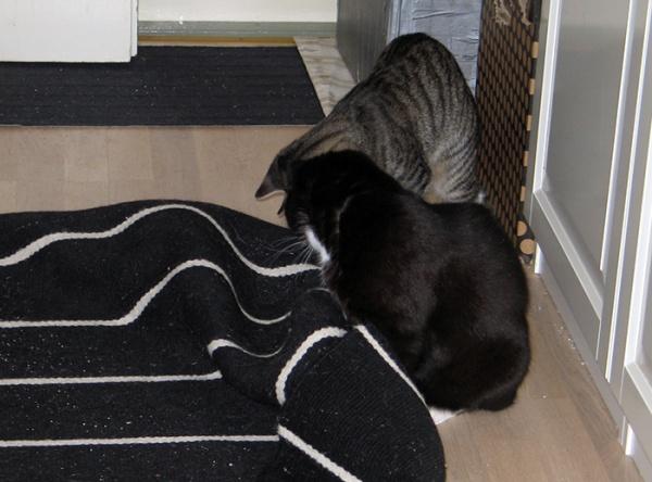 kumpikin rullaa mattoa eteisessä, jotain jännää sen alla