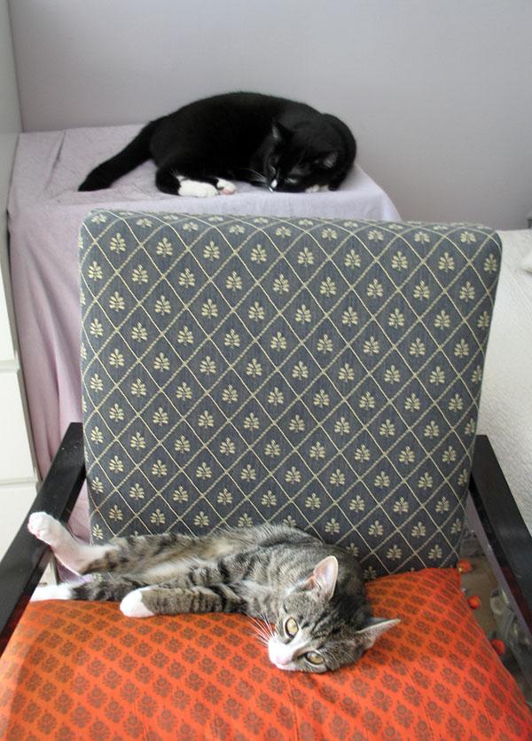 Ilona nukkuu laatikoiden päällä, poika tuolissa