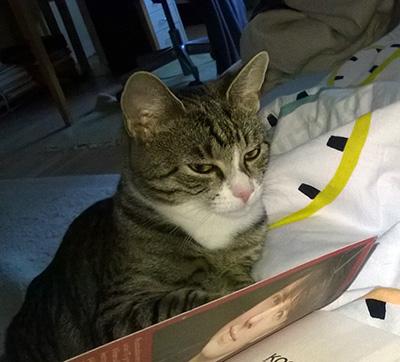 Zetor murjottaa kirjan takana