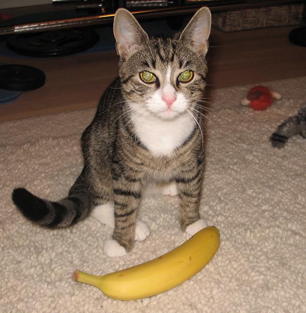 istuu tyynesti banaanin takana