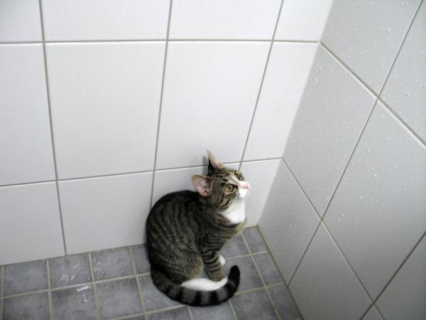 5 kuvaa joissa Zetor hiukan eri asennoissa kylppärin nurkassa suihkuni jälkeen