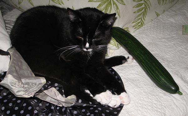 Ilona nukkuisikin kurkun vieressä
