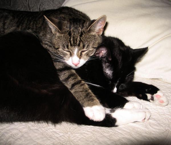 kissat nukkuu päällekkäin