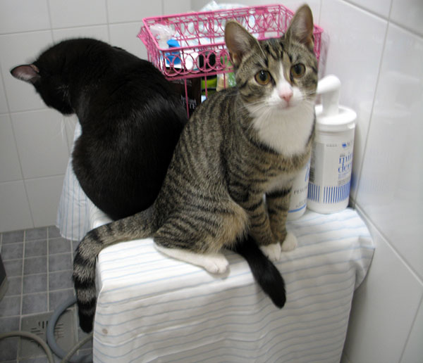 istuvat pesukoneen päällä hännät ristissä